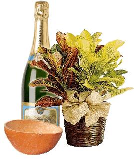 Winti creton plant aisa